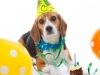 pet first birthday party  celebration