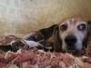 maes-filhotes-cachorros-portaldodog-2_0