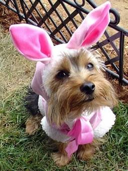 Easter Bunny Dog Costume Australia