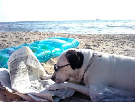 cachorros_lendo_portaldodog-10