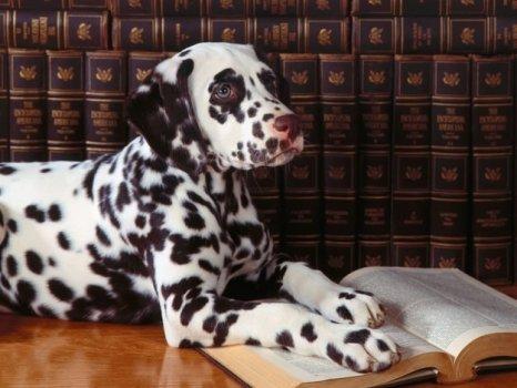 cachorros_lendo_portaldodog-11