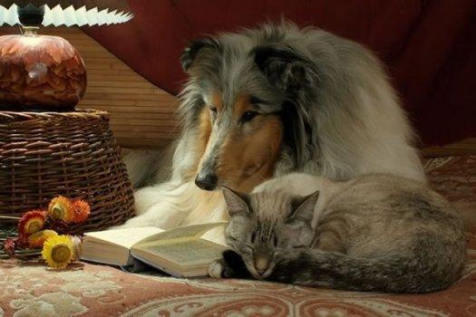 cachorros_lendo_portaldodog-12