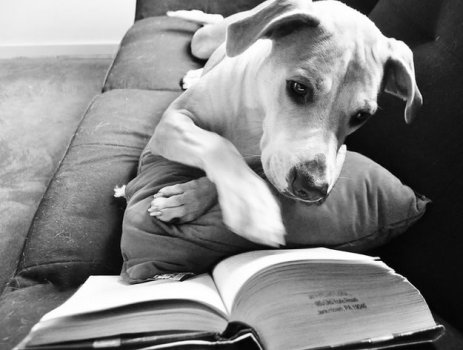 cachorros_lendo_portaldodog-13