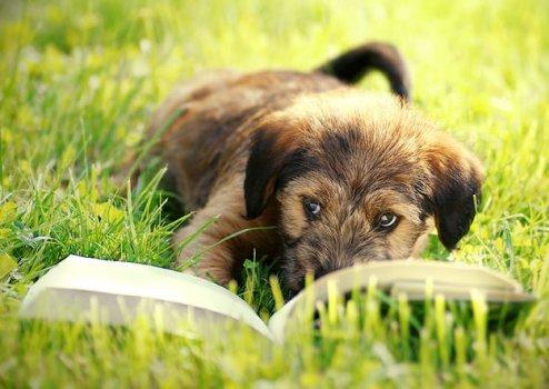 cachorros_lendo_portaldodog-15