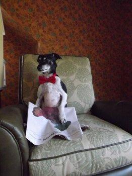 cachorros_lendo_portaldodog-16