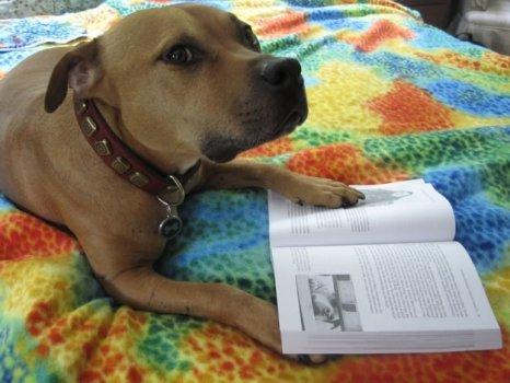 cachorros_lendo_portaldodog-18