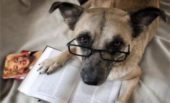 cachorros_lendo_portaldodog-19