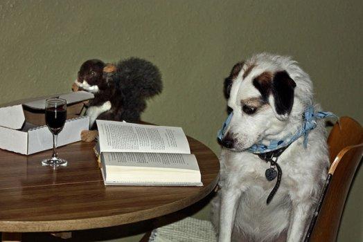cachorros_lendo_portaldodog-2