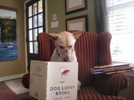 cachorros_lendo_portaldodog-20