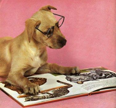 cachorros_lendo_portaldodog-21
