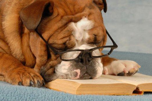 cachorros_lendo_portaldodog-22