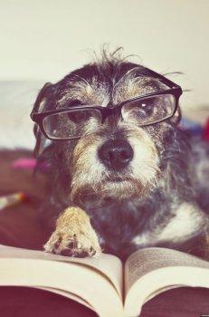 cachorros_lendo_portaldodog-23
