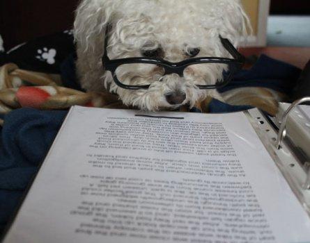 cachorros_lendo_portaldodog-4