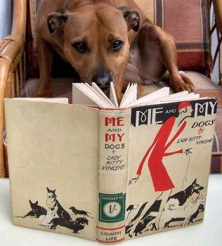cachorros_lendo_portaldodog-6