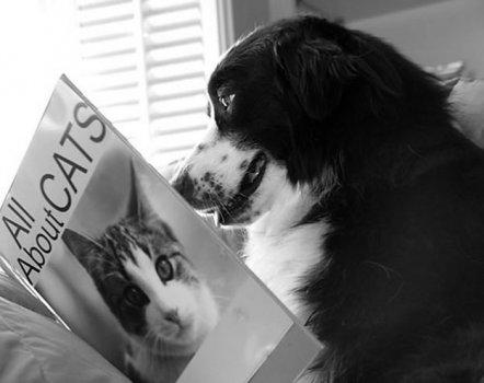 cachorros_lendo_portaldodog-8