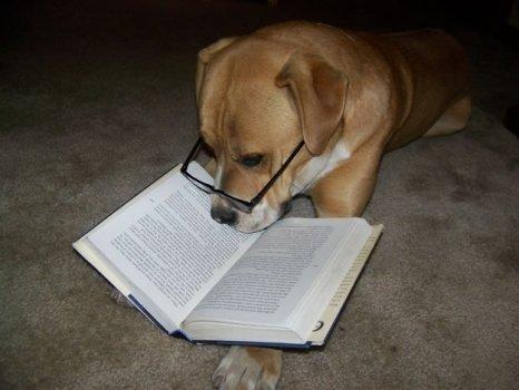 cachorros_lendo_portaldodog-9