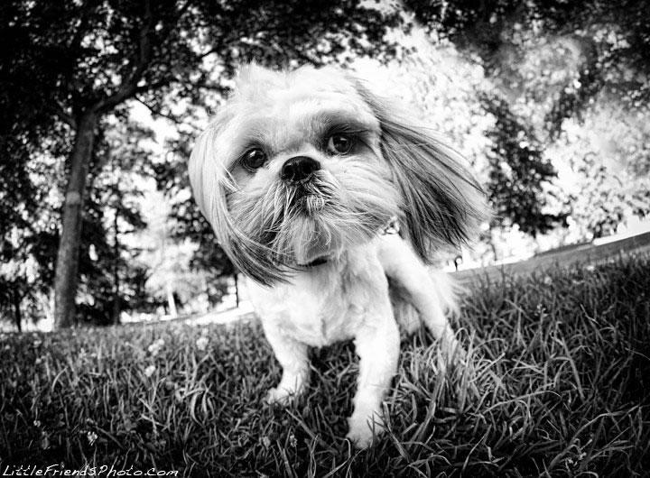 cachorros em preto e branco