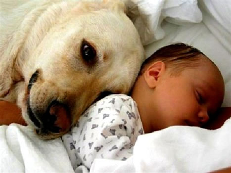 cachorros_bebes_portaldodog-1
