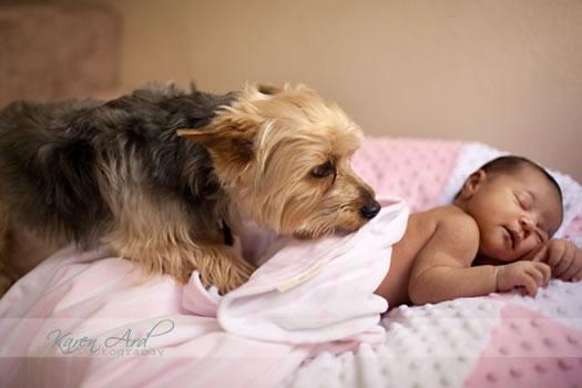cachorros_bebes_portaldodog-10