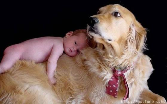 cachorros_bebes_portaldodog-11