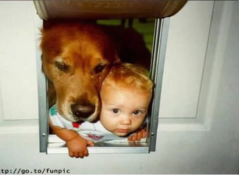 cachorros_bebes_portaldodog-12