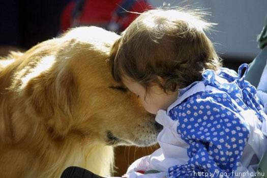 cachorros_bebes_portaldodog-14