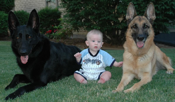 cachorros_bebes_portaldodog-15