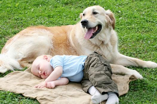 cachorros_bebes_portaldodog-16