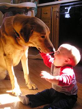 cachorros_bebes_portaldodog-17