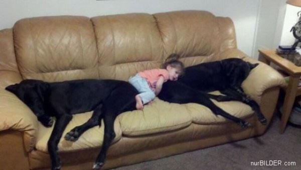 cachorros_bebes_portaldodog-18