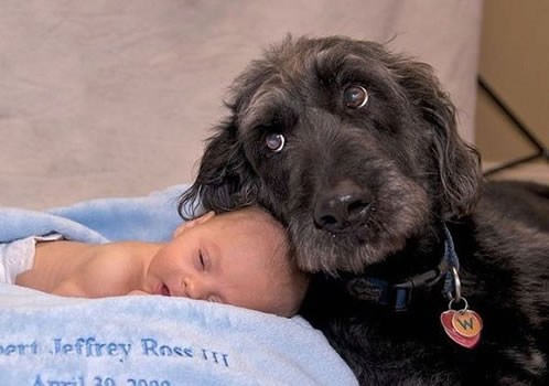 cachorros_bebes_portaldodog-19