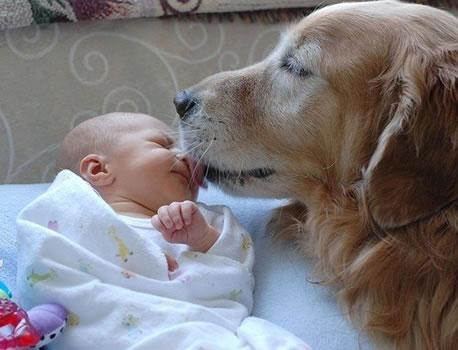 cachorros_bebes_portaldodog-2