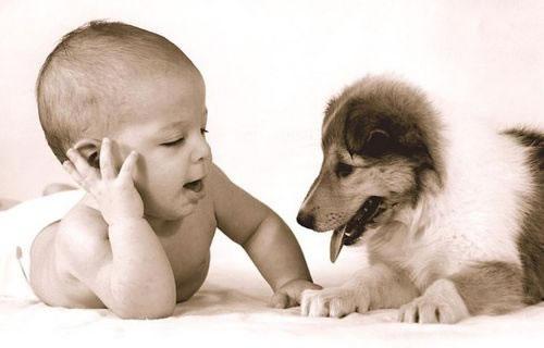 cachorros_bebes_portaldodog-20