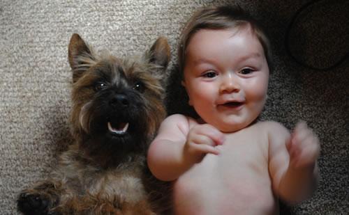 cachorros_bebes_portaldodog-21