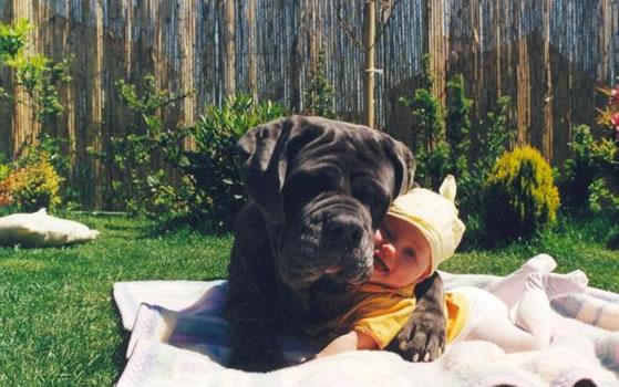 cachorros_bebes_portaldodog-23