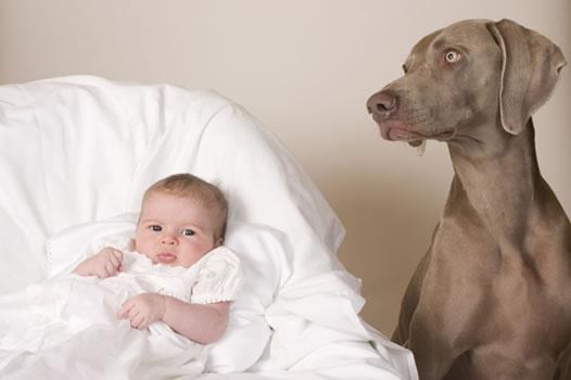 cachorros_bebes_portaldodog-25