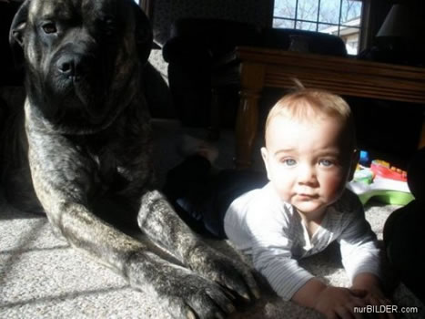 cachorros_bebes_portaldodog-4