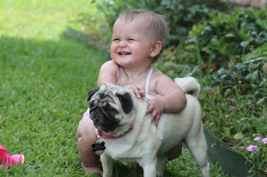 cachorros_bebes_portaldodog-5