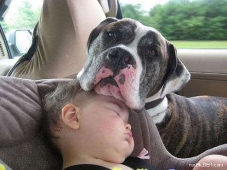 cachorros_bebes_portaldodog-6