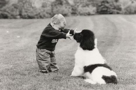 cachorros_bebes_portaldodog-8