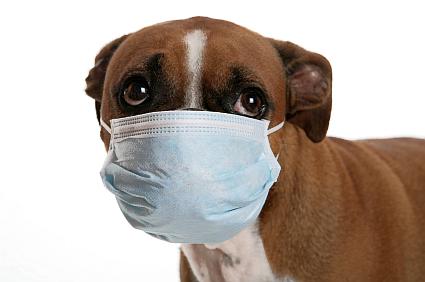 Zoonotic Diseases Dogs Uk