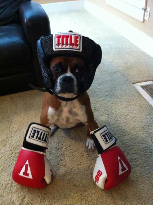 O Boxer Baba Boxer - Portal ...