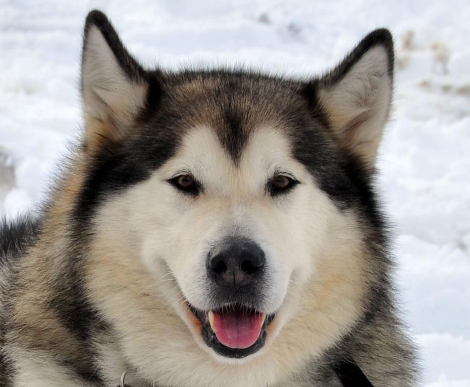 8 Ra 231 As De Cachorro Com Curr 237 Culos Impressionantes