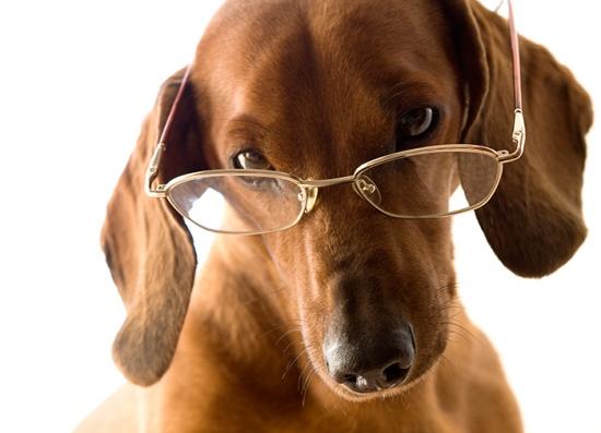 visao-canina