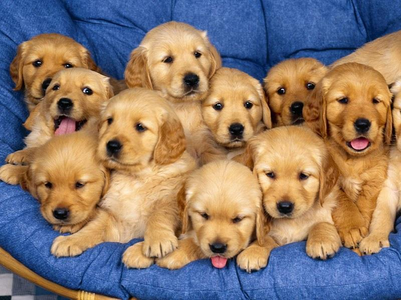 foto de cachorros: