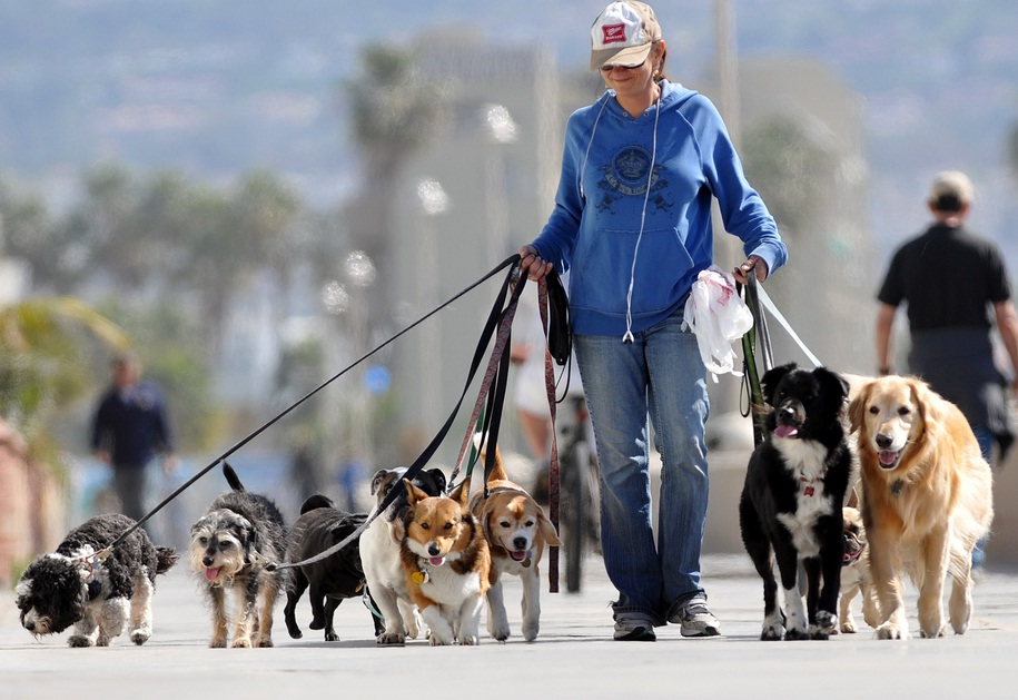 Conheca a profissao dog walker passeador de cachorros for Professional dog walking service