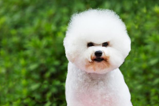 cachorros de colo
