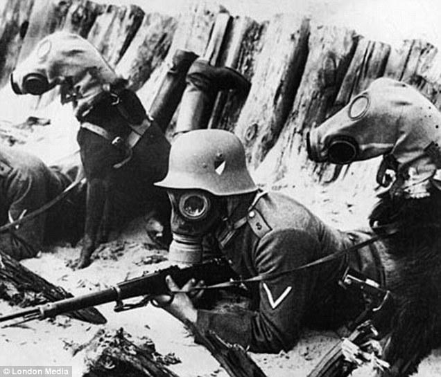 dogs mascaras-gas-world-war