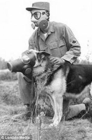 cachorros-mascaras-guerra-mundial