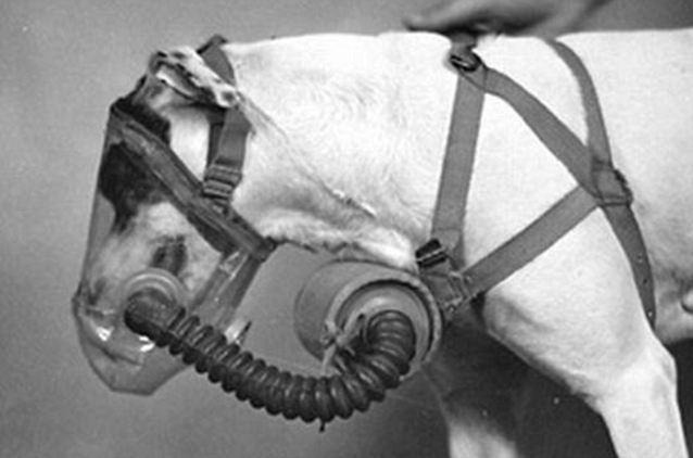 cachorro-mascaras-guerra-mundial